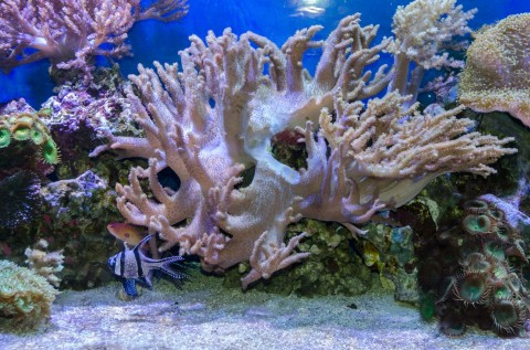 tropical-sea-underwater-with-corals-1397116135uLE